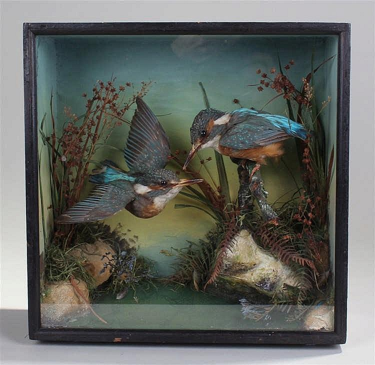 Victorian taxidermical study of kingfishers, by James Gardner of London.  T