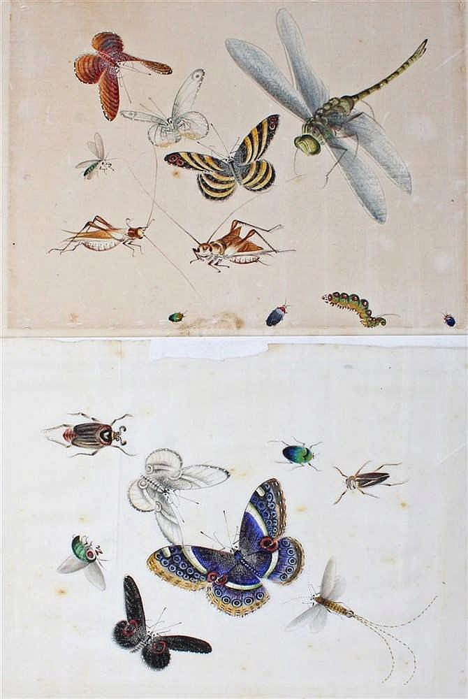 Late 19th Century Chinese watercolours, of butterflies and crickets, (2)