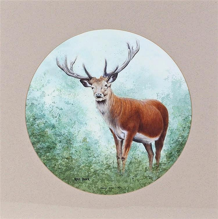 Barry Ellis, Red Deer, watercolour, signed and dated 87, 28cm x 28cm