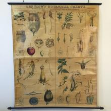 1873 Botanical Wall Chart Showing the Heath, Olive, Figwort & Mint Families