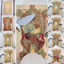 19th Century Eckel's Anatomical Aid - A Guide for Embalming