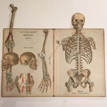 1880 Anatomical Fold-Out:  The Skeletal System, Large Folio by Witkowski