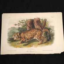 The Jaguar - Plate CI, Audubon's Quadrupeds of North America