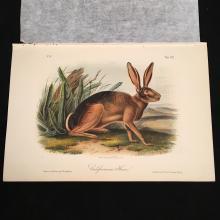 The California Hare - Plate CXII, Audubon's Quadrupeds of North America