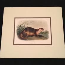 Canada Otter - Plate CXXII Matted, Audubon's Quadrupeds of North America
