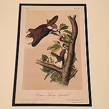 Oregon Flying Squirrel - Plate XV Matted, Audubon's Quadrupeds of North America