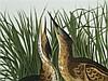 Platte - Rosenthal Classic Rose Collection, Unterglasurbemalung, Motiv nach John James Audubon (1785-1851), aus 'Birds of America', aufwendiger Vogeldekor, rechteckige Form mit abgerundeten Ecken, ca.28x38cm