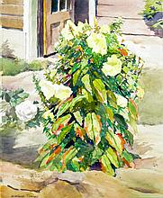 Winthrop Turney (1884-1965), Yard in Gloucester, 1951, Watercolor