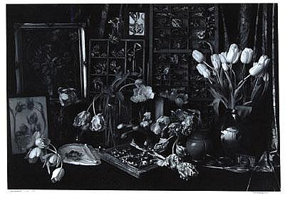 Photographs: John Blakemore (b.1936) tulipomania #