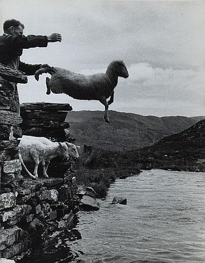 Photographs: Grace Robertson (b.1930) sheep