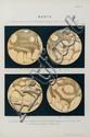 Schiaparelli (G.V.) Osservszioni Astronomiche e