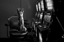 Jason McGroarty - Totem Fox
