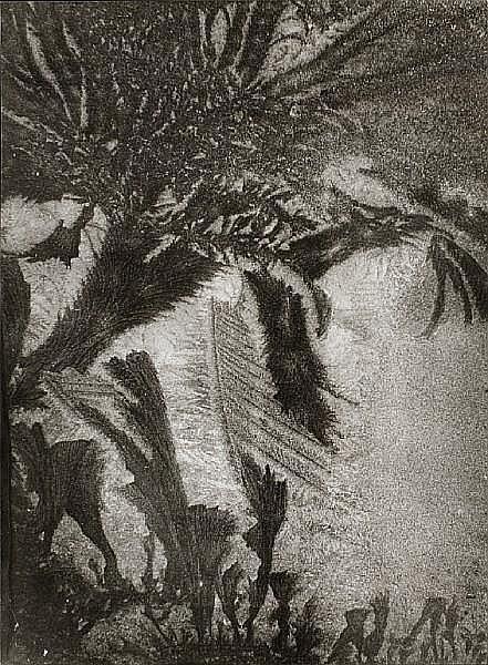 Erna Lendvai-Dircksen (German, 1883-1962) Eisblümen (studies of ice flowers), 1940s Various sizes between 23.2 x 16.1cm (9 1/8 x 6 5/16in) and 28.8 x 22.2cm (11 5/16 x 8 3/4in) or the reverse.
