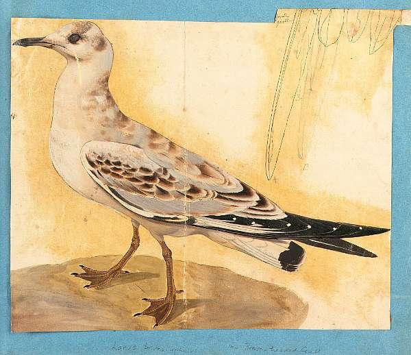 Samuel Daniell (British, 1775-1811)