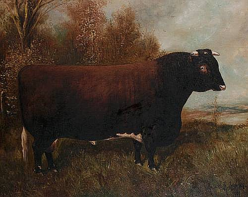 Herbert H. St. John Jones (British, 1870-1939) 'Royal Seal' - A shorthorn bull