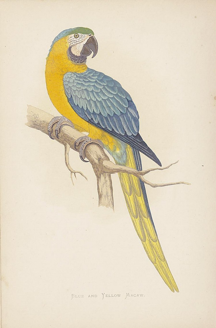 GREENE (WILLIAM THOMAS) Parrots in Captivity vol. 2 (of 3), 26 chromolithographed plates, 1884