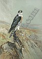 Roland Green (British, 1896-1972) Peregrine falcon in a rocky landscape 48.5 x 35cm (19 x 13 3/4in)., Roland Green, Click for value