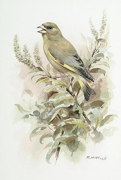 Roger McPhail (British, b.1953) A Greenfinch on a branch, 24.5 x 17 cm (9 5/8 x 6 5/8 in)