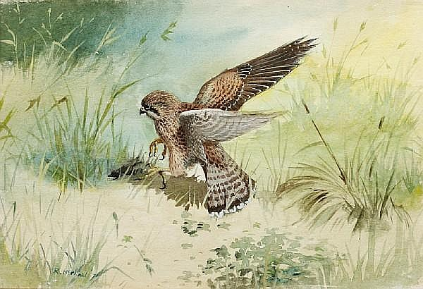 Rodger McPhail (British, born 1953) Kestrel with prey