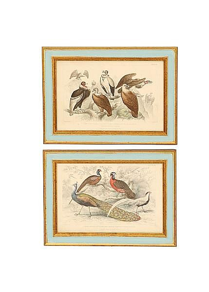 A set of twelve hand coloured plates of birds from The History of Birds, London 1862