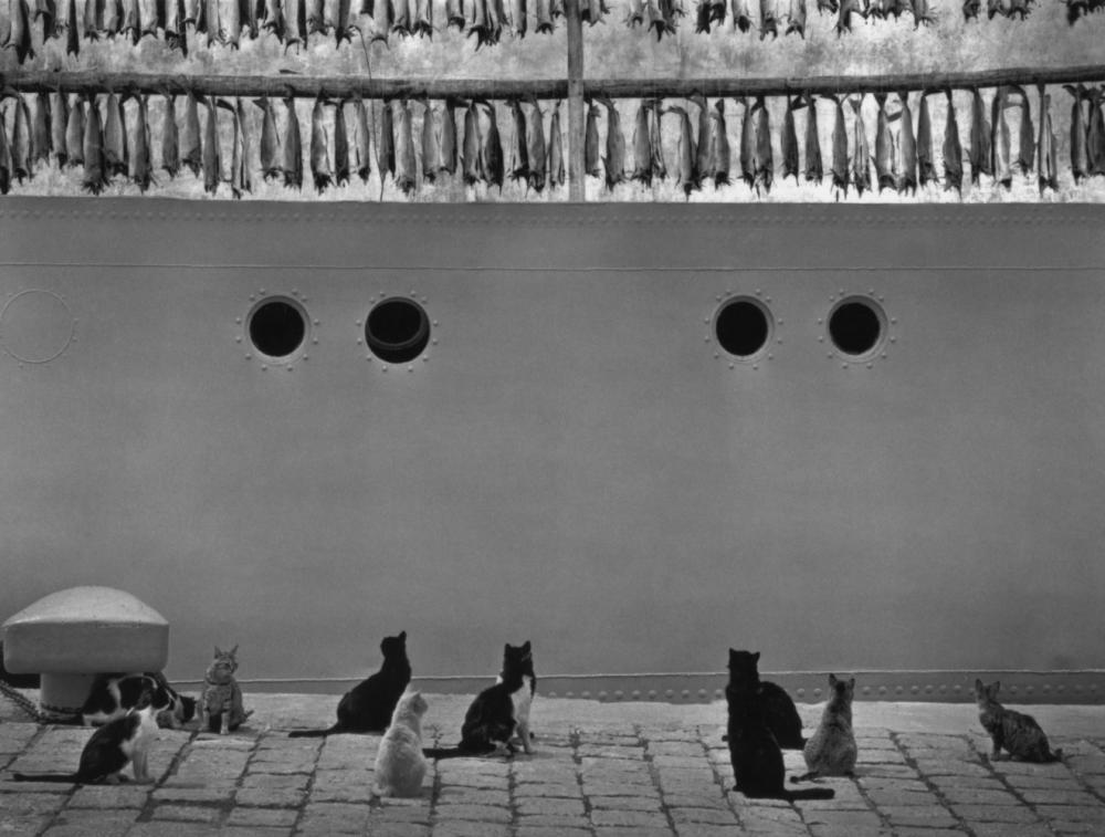 Коты смотрят на рыбу. Исландия, 1980. Фотограф Пентти Саммаллахти