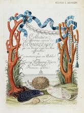 KNORR, GEORG WOLFGANG. 1705-1761. Les delices des yeux et de l'esprit, ou collection Generale des differentes especes de coquillages que la mer renferme. Nuremburg: 1764-1773.
