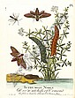 ALBIN (ELEAZAR) A Natural History of English Insects, Eleazar (1713) Albin, Click for value