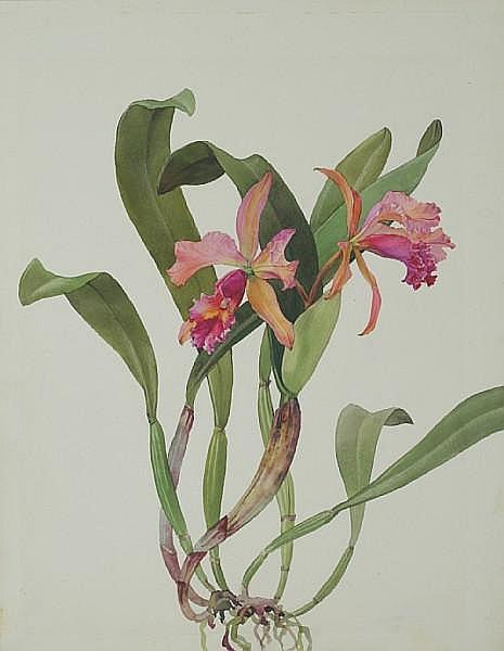 Andrey Nikolaevich Avinoff (1884-1949) 'Day Joy orchid' unframed