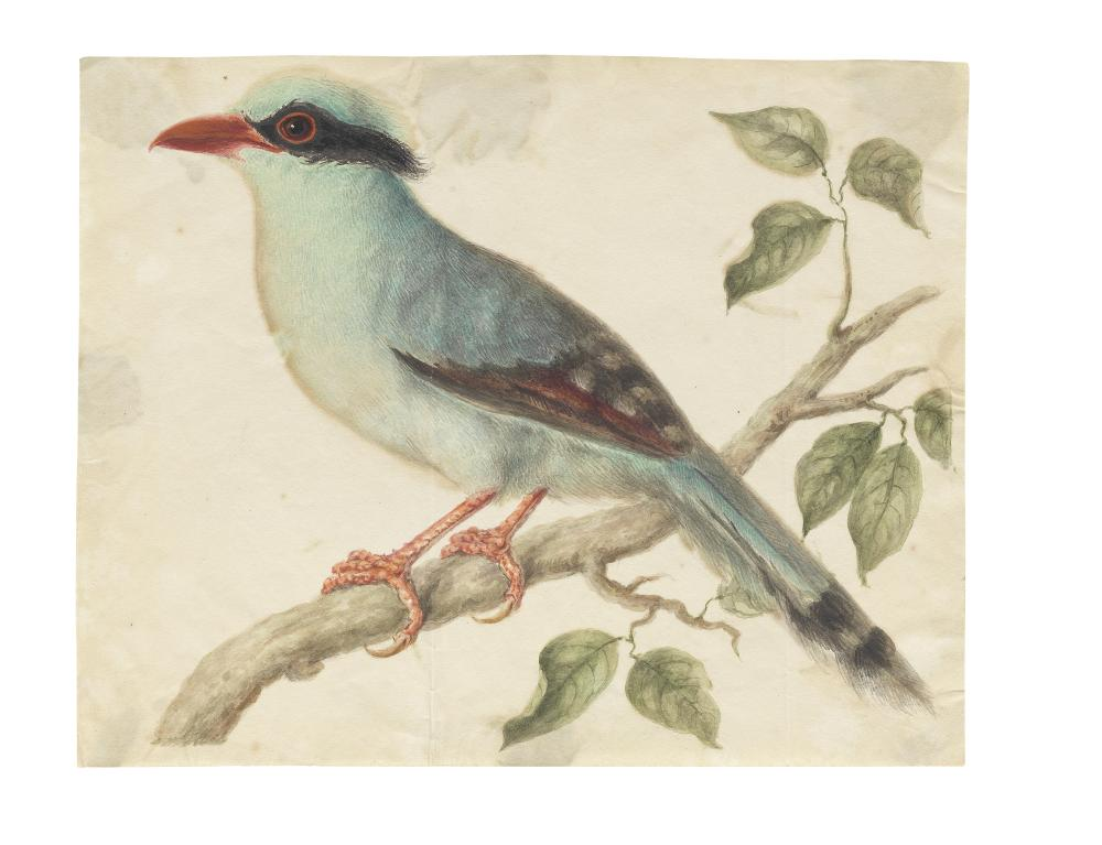 Eleven studies of birds and plants Company School, Calcutta, and some by European hands, early 19th Century, some with watermarks 1810, 1815, 1818 and 1824(11)