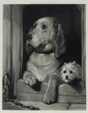 Sir Edwin Landseer Dignity Impudence Dog Etching
