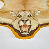 American Mountain Lion Cougar Taxidermy Carpet