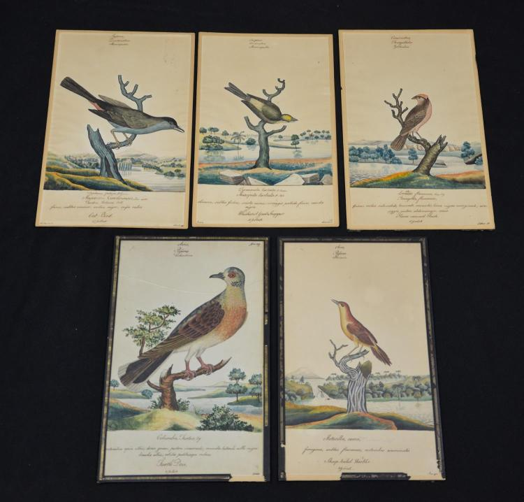 (5) William Goodall (British, 1757-1844), watercolor, Drawings of Birds, 13 x 8