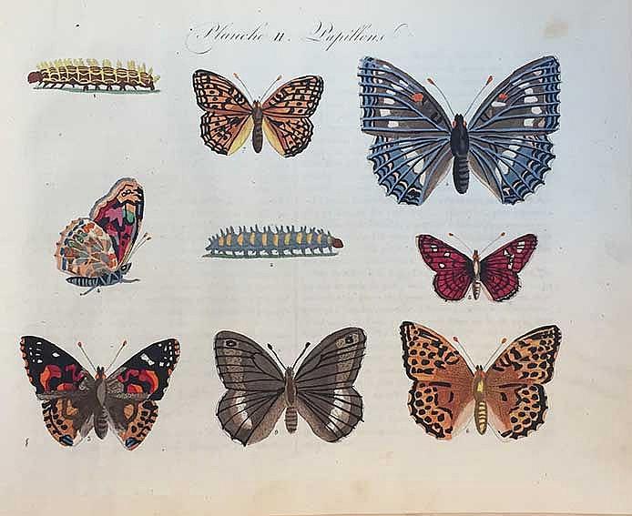 (BALLAND, E.A.). Les papillons, leur histoire, la manière de leur faire la