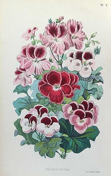 CAP, P.-A. Le muséum d'histoire naturelle. Par., 1854. 2 parts in 1 vol. (8