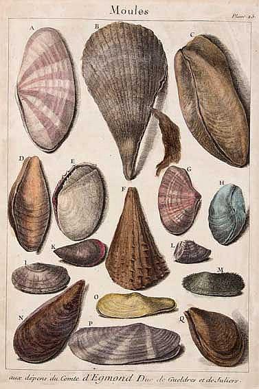 CONCHOLOGY -- (DEZALLIER D'ARGENVILLE, A.J.). Histoire naturelle éclaircie