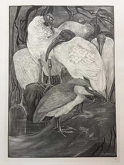 HOYTEMA, Theodoor ('Theo') v. (1873-1917). 'Vijf ibissen en een kwak' - 'Tw