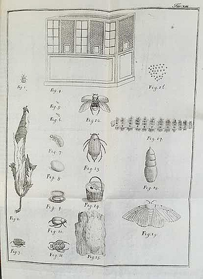 BOTANY -- MITTERPACHER v. MITTERBURG, L. Elementi d'agricoltura. Trad. in I