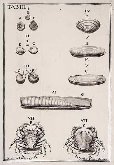 CONCHOLOGY -- BIANCHI, G.P.S. (J. Plancus). De conchis minus notis liber cu