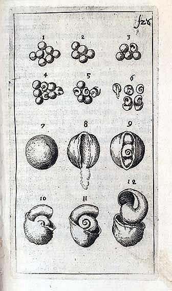 CONCHOLOGY -- M(ARSILI), A.F. Relazione del ritrovamento dell'uova di chioc