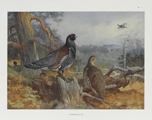 THORBURN, ARCHIBALD. 1860-1935.- Game Birds and Wild-Fowl of Great Britain and Ireland. London: Longmans, Green and Co., 1923.