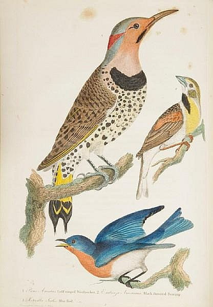 WILSON, ALEXANDER. 1766-1813. American Ornithology; or, The Natural History of the Birds of the United States. Philadelphia: Bradford and Inskeep, 1808-14.