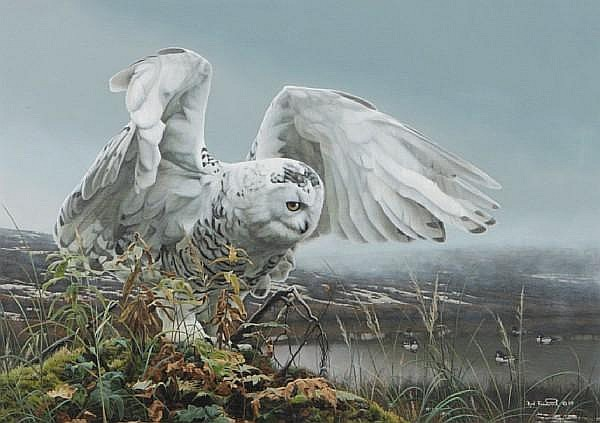 Rod Frederick (American, born 1956) White Owl about to take flight 15 x 21in