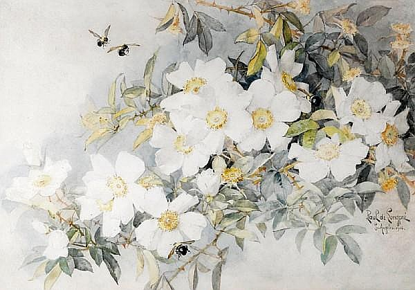 Paul de Longpre (American, 1855-1911) White roses with carpenter bees, 1905 sight: 18 x 25 3/4in