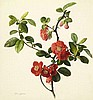 Mary Lawrance (British) (fl. 1794-1830) Pyrus japonica (Japanese quince) 11 3/4 x 11 1/8in (30 x 28.3cm), Mary (1794) Lawrence, Click for value