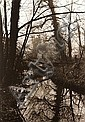 Don McCullin (British, 1935); Untitled (Pond in Woods);, Don McCullin, Click for value