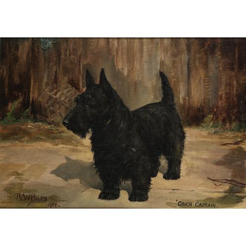 Reuben Ward Binks (British 1880-1940) Scottish Terrier 'Crich Captain' 10 x 14 inches (25.5 x 35.5 cm.)