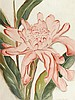 Torch ginger 22 3/4 x 17 1/4in overall: 33 3/4 x 25 3/4in, Shirley Marie Hopper Russell, Click for value
