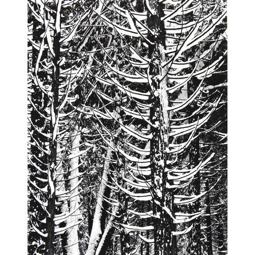 Ansel Adams, Winter, forest detail, photograph