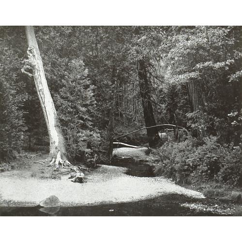 Ansel Adams, Yosemite Creek, photograph