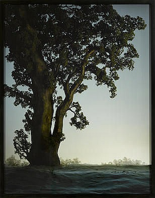 DIDIER MASSARD (BORN 1953) Summer Tree, 2000 signed 'Didier Massard' (on th